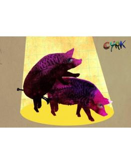 Cyrk (dwie świnki)